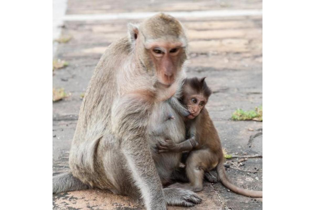 美国猴子案件:1925美国一只猴子引起的官司