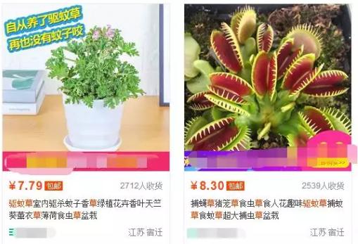 网上卖驱蚊草发家致富网,一个适合夏天操作的产品!