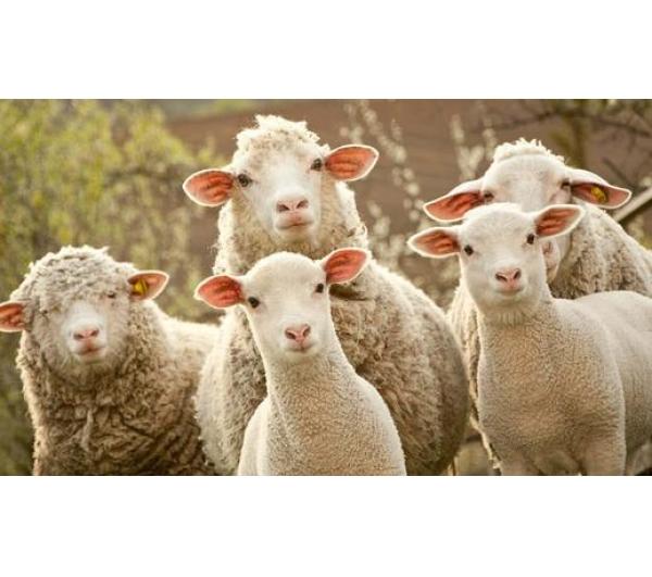 薅羊毛月入5000难不难?有哪些要注意
